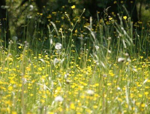 7 Naturheilmittel gegen Heuschnupfen und Allergien