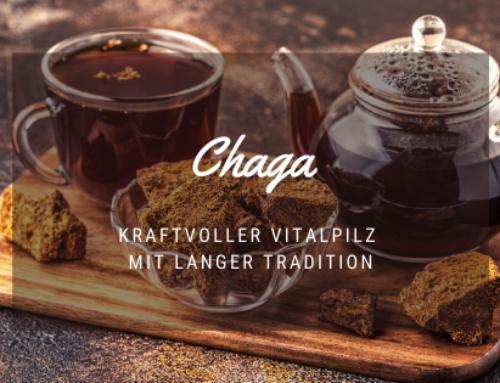 Chaga Pilz: Kraftvoller Vitalpilz mit langer Tradition