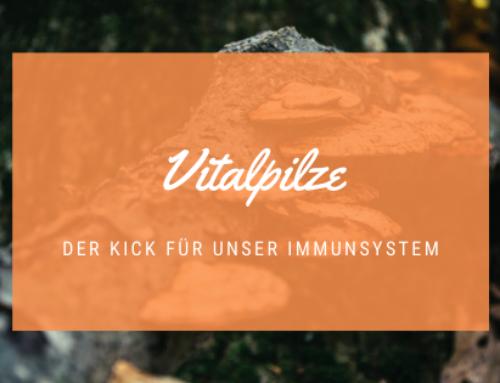 Vitalpilze – der Kick für unser Immunsystem
