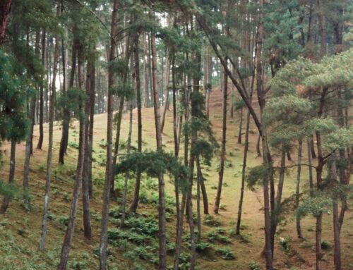 Eukalyptus: Darum sollte er vor allem im Winter in keiner Hausapotheke fehlen